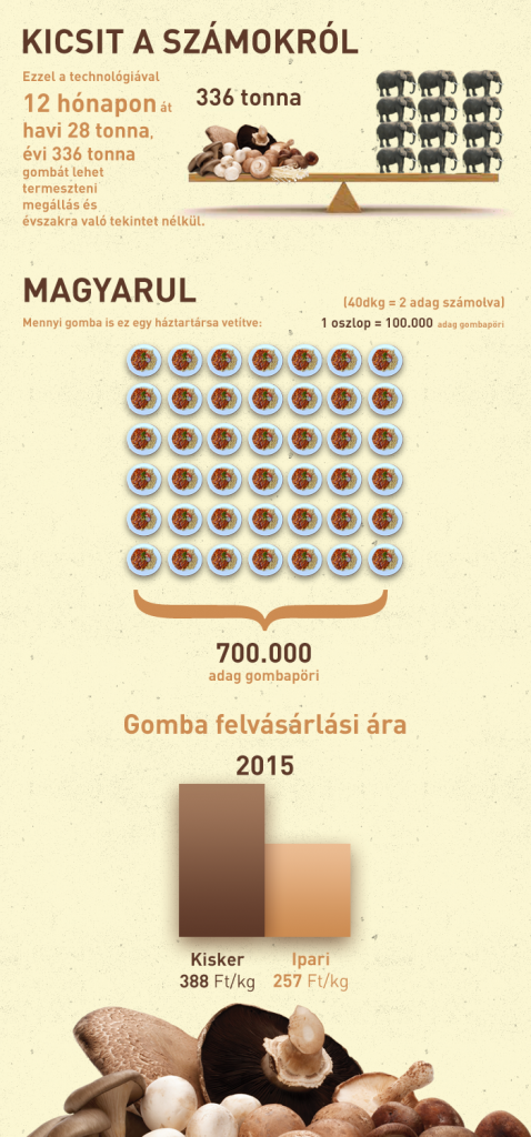 gomba_infografika_v5